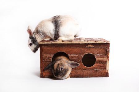 Zwei Hasen sitzen auf einem Hasenstall XXL