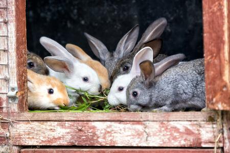 Hasen sitzen draußen im Hasenstall und essen Heu