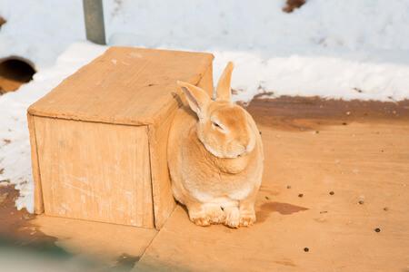 Ein Hase sitzt vor seinem winterfesten Hasenstall welcher von Schnee umgeben ist